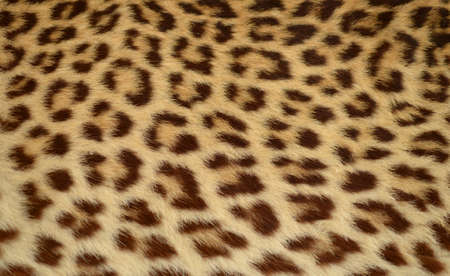 leopard tiger skin texture background  Stock Photo - 14333725