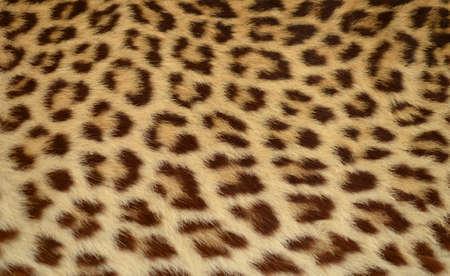 leopard skin: leopard tiger skin texture background  Stock Photo
