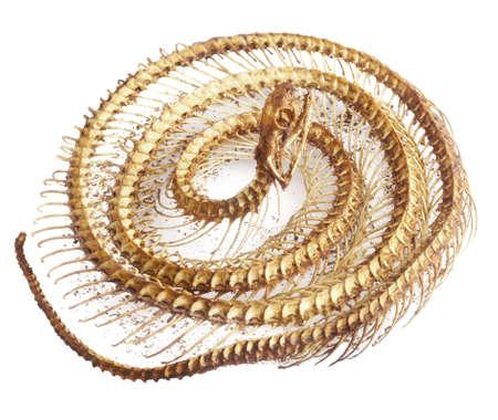 carcass: snake bone on white background