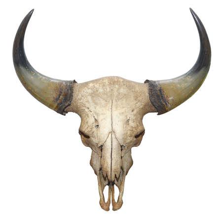 crâne tête de taureau isolé sur fond blanc Banque d'images
