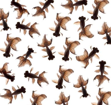 goldfish pattern isolated on white background photo