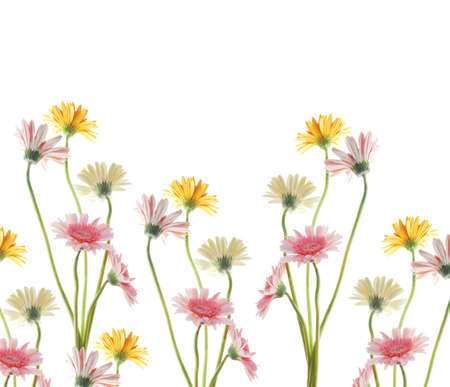 gerbera flower isolated on white background  Stock Photo - 14842265