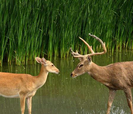 love target: wildlife, deer on wild background