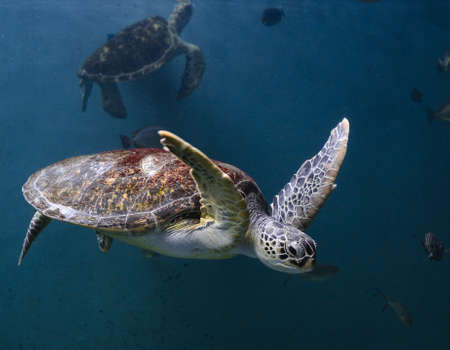 sea turtle Stock Photo - 14868472