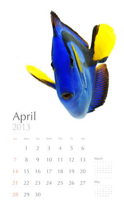 2013 calendar, sea marine life concept photo