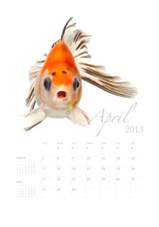 2013 Calendar A4 vertical size, Goldfish lover concept Stock Photo - 14949171