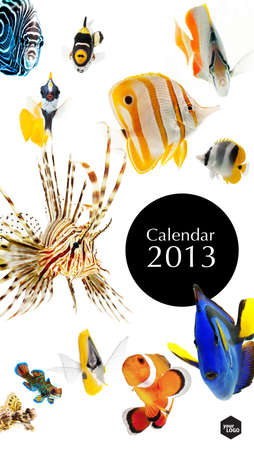 2013 calendar, sea marine life concept, cover page photo