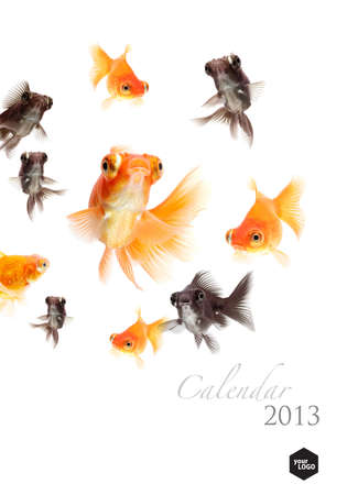 2013 Calendar, Goldfish lover concept cover page Stock Photo - 14949226