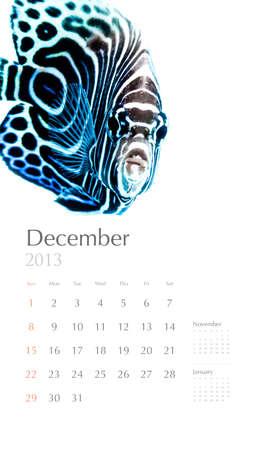 2013 calendar, sea marine life concept, reef fish photo