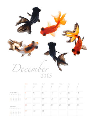 2013 Calendar A4 vertical size, Goldfish lover concept Stock Photo - 14949223