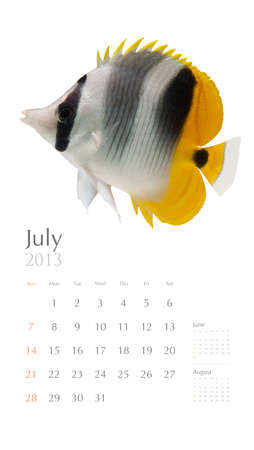 2013 calendar, sea marine life concept, butterflyfish photo