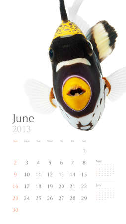 clown triggerfish: 2013 calendar, sea marine life concept, reef fish