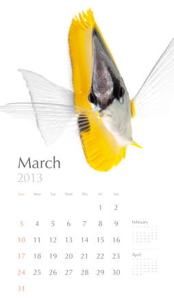 2013 calendar, sea marine life concept, marine fish photo