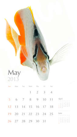 cross hatch: 2013 calendar, sea marine life concept, coral fish
