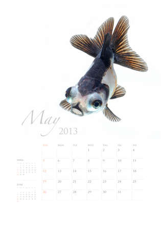 2013 Calendar A4 vertical size, Goldfish lover concept Stock Photo - 14949200
