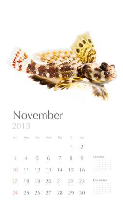 dragonet: 2013 calendar, sea marine life concept, coral fish