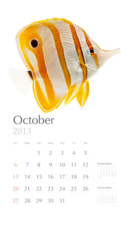 copperband butterflyfish: 2013 calendar, sea marine life concept, reef fish
