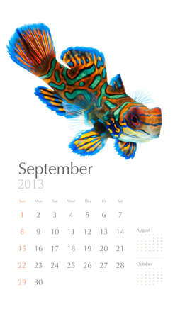 2013 calendar, sea marine life concept, mandarin photo