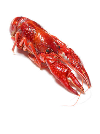 red crayfish lobster prawn isolated on white background Stock Photo - 15879079