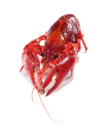 red crayfish lobster prawn isolated on white background Stock Photo - 15879076
