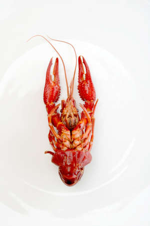 cancers: red crayfish lobster prawn isolated on white background