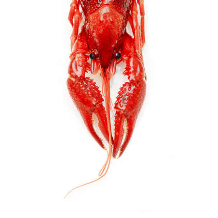 red crayfish lobster prawn isolated on white background Stock Photo - 15878141