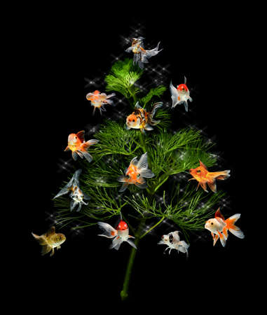 exotic pet: christmas tree underwater concept with goldfish ornament on black background  Stock Photo