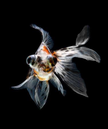 goldfish isolated on black background Stock Photo - 18001189