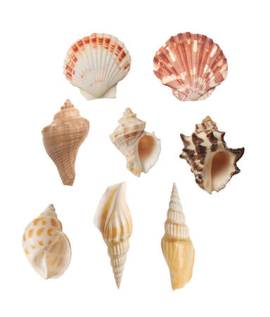 seashell collection isolated on white background Stock Photo - 18334141