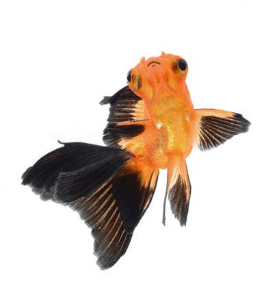goldfish isolated on white background Stock Photo - 18334142