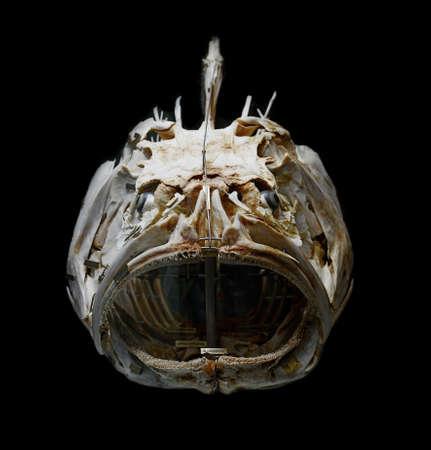 cernia: scheletro del gigante cernia, merluzzo patate pesce su sfondo nero Archivio Fotografico