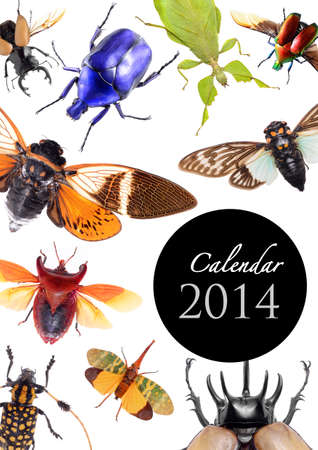2014 Calendar, insect bug beetle concept on white background Stock Photo - 22975019