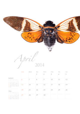 2014 calendar , insect bug beetle design on white background Stock Photo - 22975020