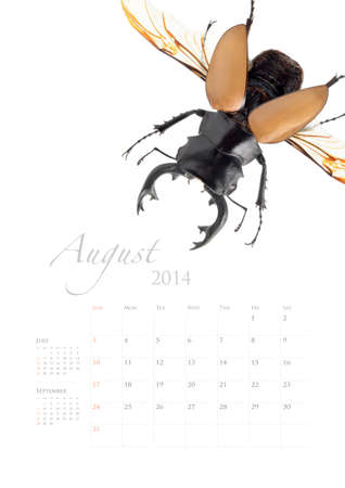 2014 calendar , insect bug beetle design on white background Stock Photo - 22975021