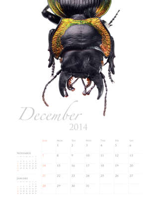 2014 calendar , insect bug beetle design on white background Stock Photo - 22975022