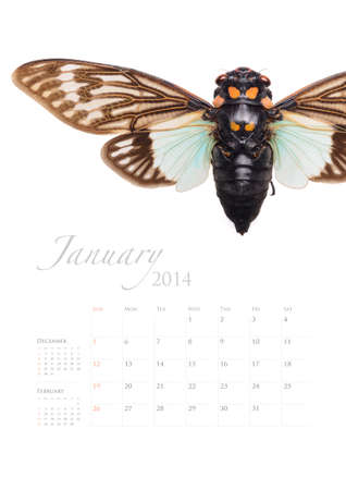 2014 calendar , insect bug beetle design on white background Stock Photo - 22975024