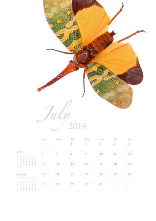2014 calendar , insect bug beetle design on white background Stock Photo - 22975025