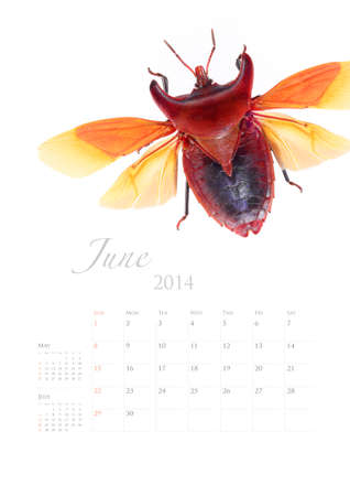 2014 calendar , insect bug beetle design on white background Stock Photo - 22975026