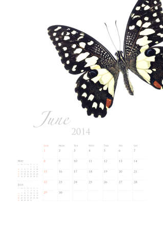 2014 calendar , insect bug beetle design on white background Stock Photo - 22975027