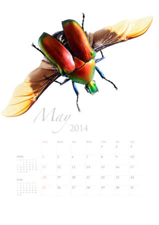 2014 calendar , insect bug beetle design on white background Stock Photo - 22975030