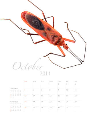 2014 calendar , insect bug beetle design on white background Stock Photo - 22975032