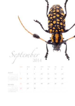 2014 calendar , insect bug beetle design on white background Stock Photo - 22975033