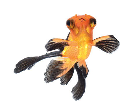 goldfish isolated on white background Stock Photo - 22378711