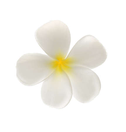 Frangipani tropical flower isolated on white background , studio shot Stock Photo - 22378740