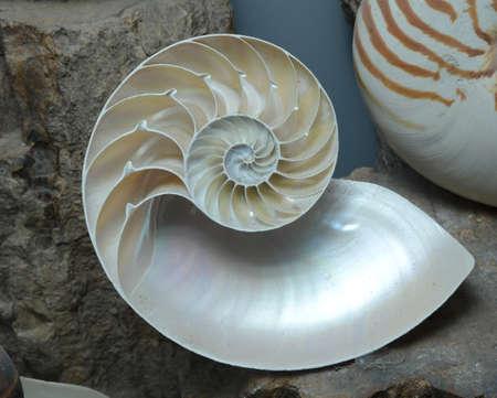 geometri: Nautilus kabuk