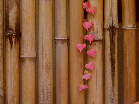 autumn red leaf on bamboo fence