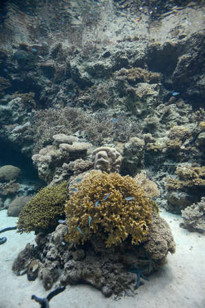 diving save: coral reef underwater
