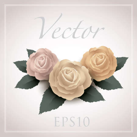 rose vector drawing eps10, vintage style graphic Illustration