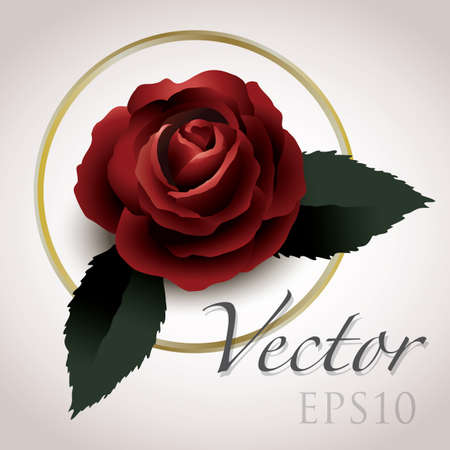 roses and blood: rose vector drawing eps10, vintage style graphic Illustration