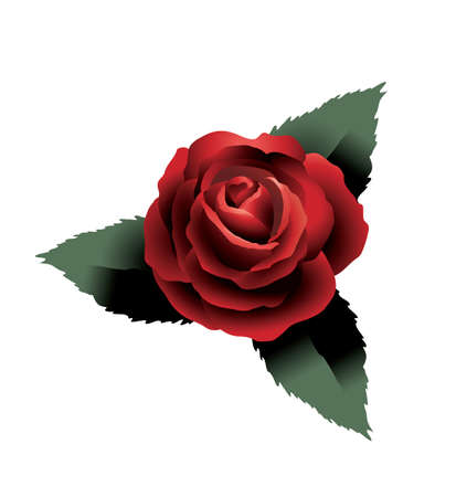 lust: Valentine rose drawing vector graphic artwork